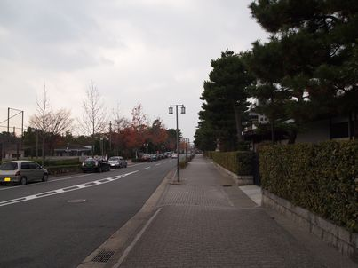 京都「八重の桜」巡り・その3_d0079440_1831458.jpg