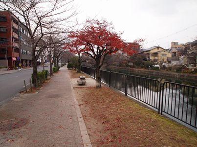 京都「八重の桜」巡り・その3_d0079440_1858431.jpg