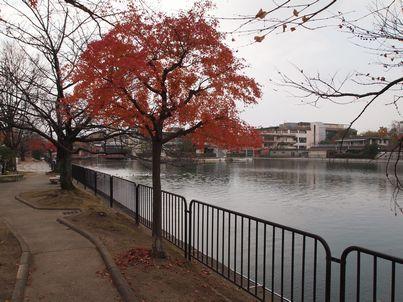京都「八重の桜」巡り・その3_d0079440_19155972.jpg