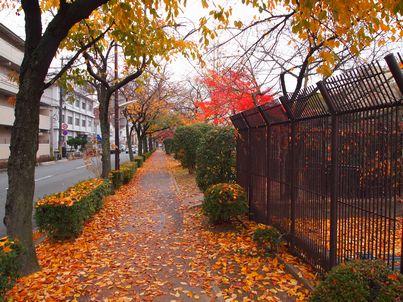 京都「八重の桜」巡り・その3_d0079440_19183736.jpg