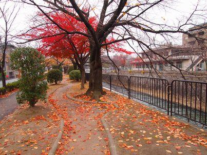 京都「八重の桜」巡り・その3_d0079440_19201412.jpg