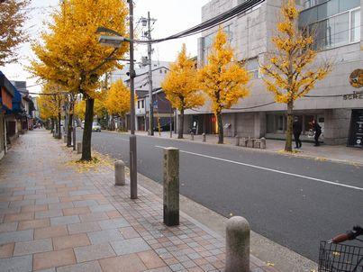 京都「八重の桜」巡り・その3_d0079440_1950993.jpg