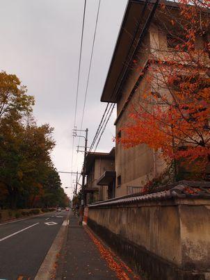 京都「八重の桜」巡り・その3_d0079440_20171419.jpg