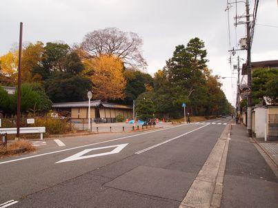 京都「八重の桜」巡り・その3_d0079440_20173333.jpg