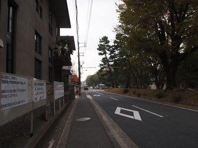 京都「八重の桜」巡り・その3_d0079440_20202367.jpg