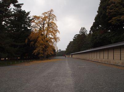京都「八重の桜」巡り・その3_d0079440_20243884.jpg