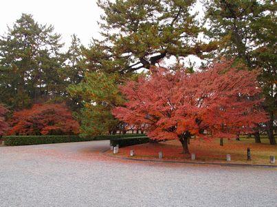 京都「八重の桜」巡り・その3_d0079440_20374440.jpg
