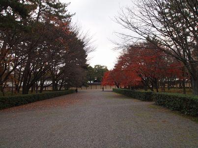 京都「八重の桜」巡り・その3_d0079440_20375843.jpg