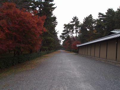 京都「八重の桜」巡り・その3_d0079440_20542848.jpg