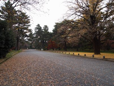京都「八重の桜」巡り・その3_d0079440_20544286.jpg