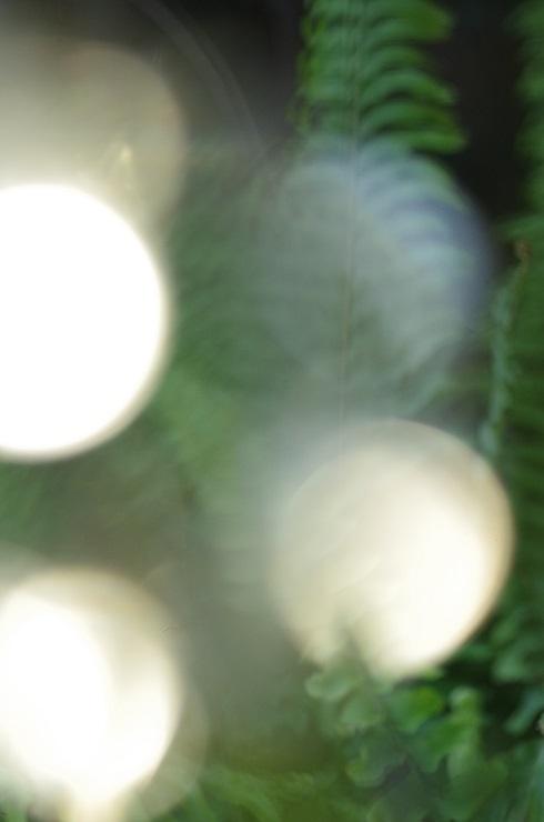 d0165741_186477.jpg