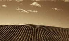 ~wineとaromayuイベント@LUCK  2013~のお知らせ_a0267845_2213527.jpg