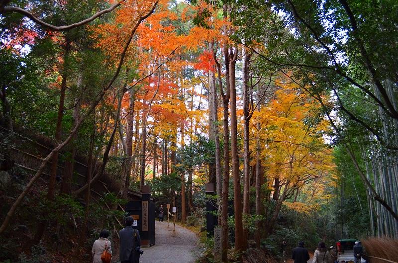 秋も深まり紅葉も終わりに近づいた『嵯峨野』を散策_e0237645_22273827.jpg