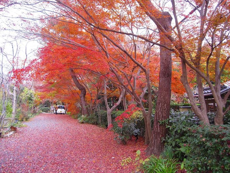 秋も深まり紅葉も終わりに近づいた『嵯峨野』を散策_e0237645_22292184.jpg