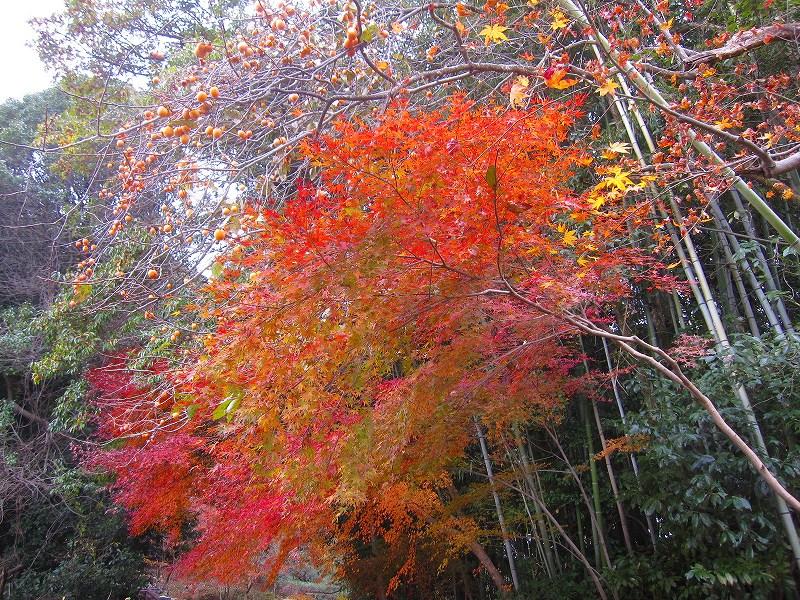 秋も深まり紅葉も終わりに近づいた『嵯峨野』を散策_e0237645_2229440.jpg