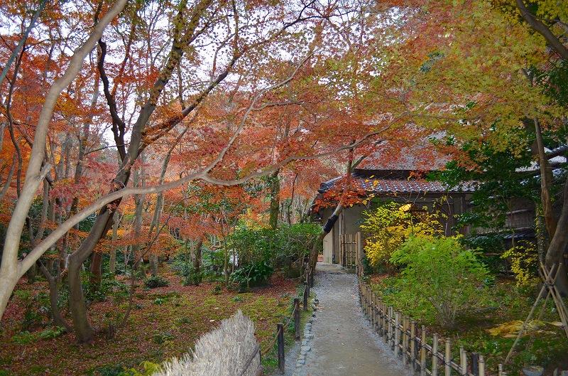 秋も深まり紅葉も終わりに近づいた『嵯峨野』を散策_e0237645_22313489.jpg