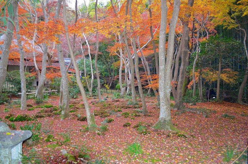秋も深まり紅葉も終わりに近づいた『嵯峨野』を散策_e0237645_2231751.jpg