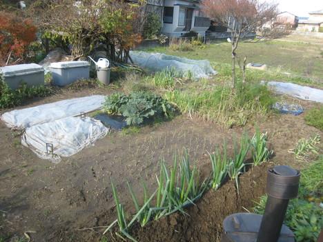 休日の収穫など・・・。_e0121558_1451353.jpg