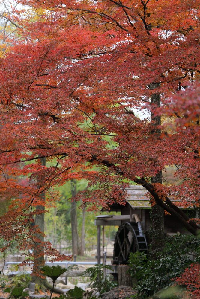 紅葉 2013 <京都府立植物園>        _f0021869_20341586.jpg