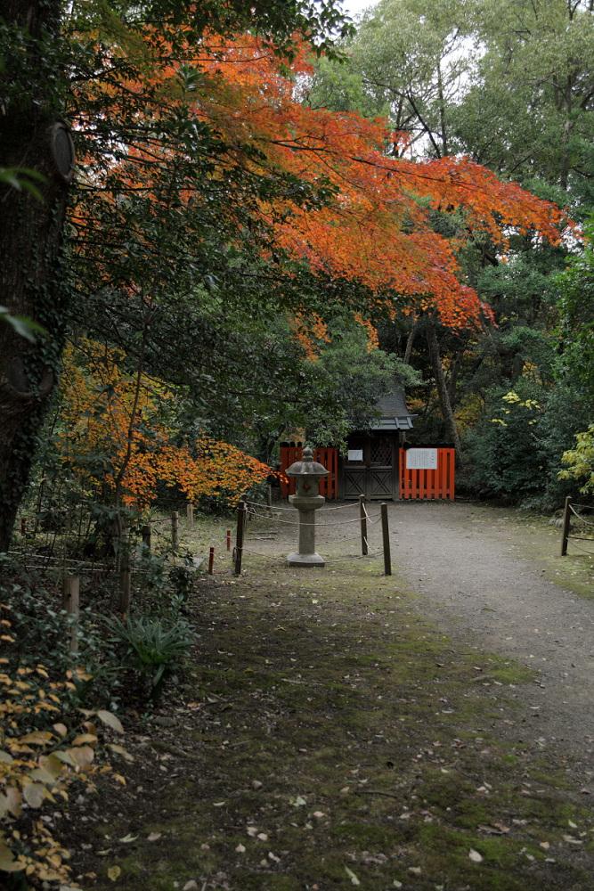 紅葉 2013 <京都府立植物園>        _f0021869_2035219.jpg