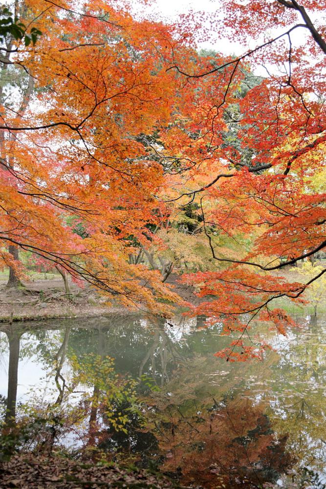 紅葉 2013 <京都府立植物園>        _f0021869_20354121.jpg