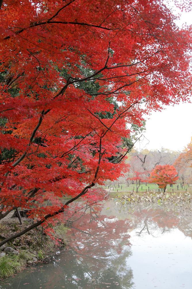 紅葉 2013 <京都府立植物園>        _f0021869_20354575.jpg
