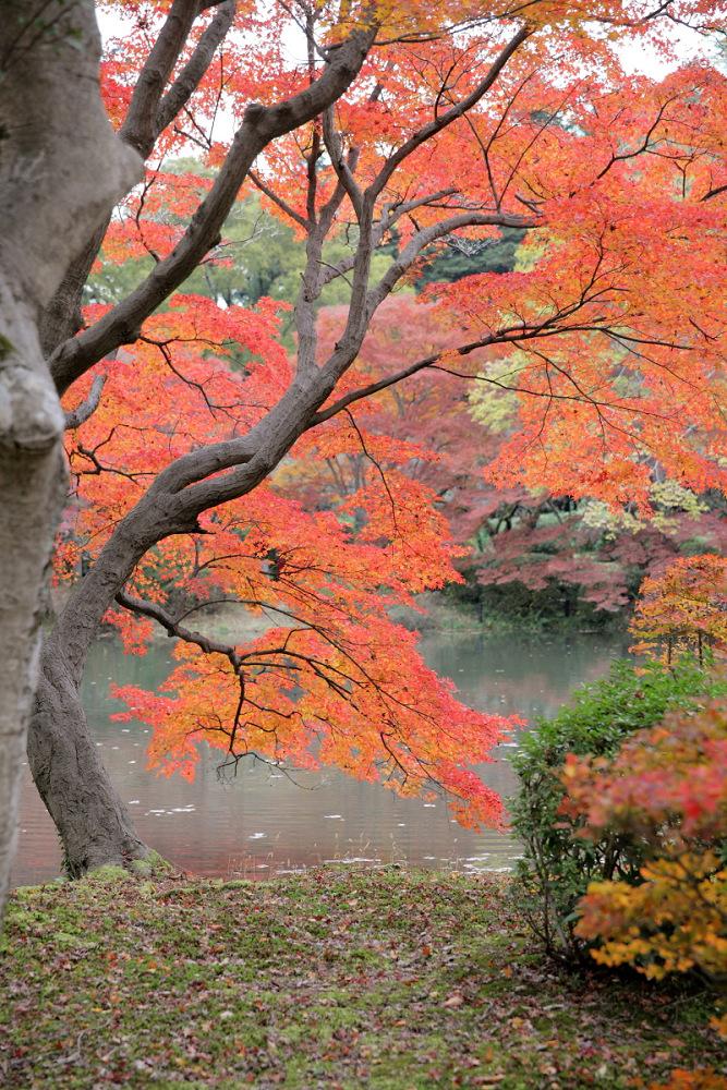 紅葉 2013 <京都府立植物園>        _f0021869_20372678.jpg