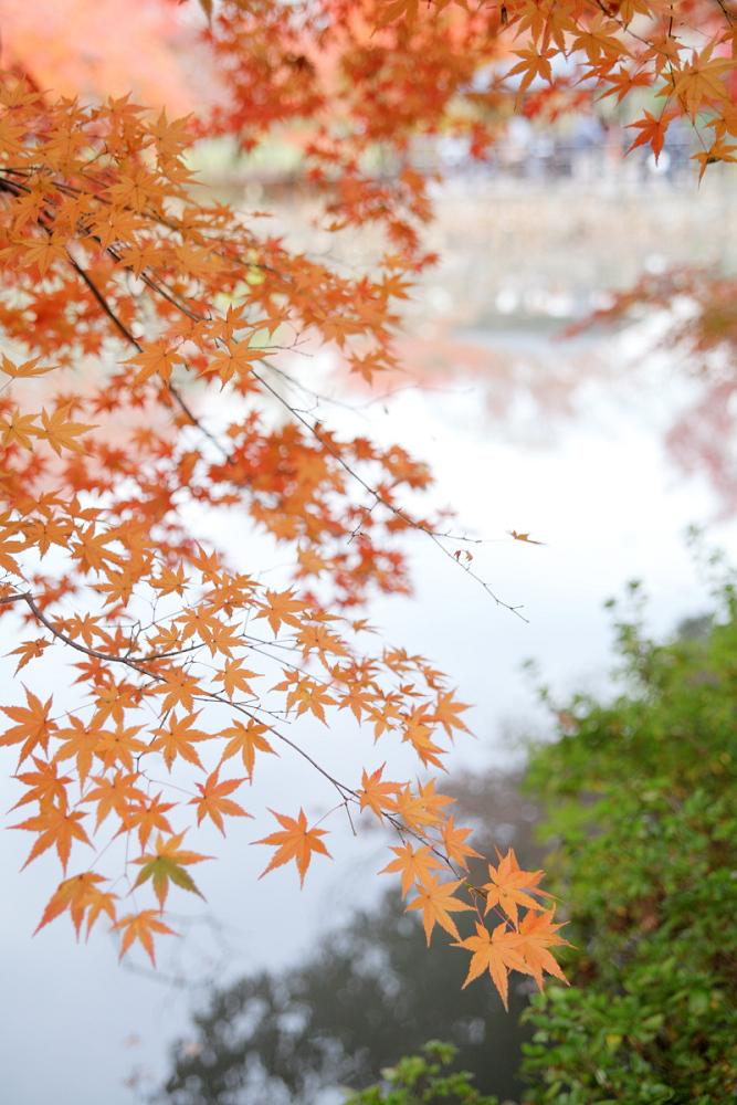 紅葉 2013 <京都府立植物園>        _f0021869_2037551.jpg