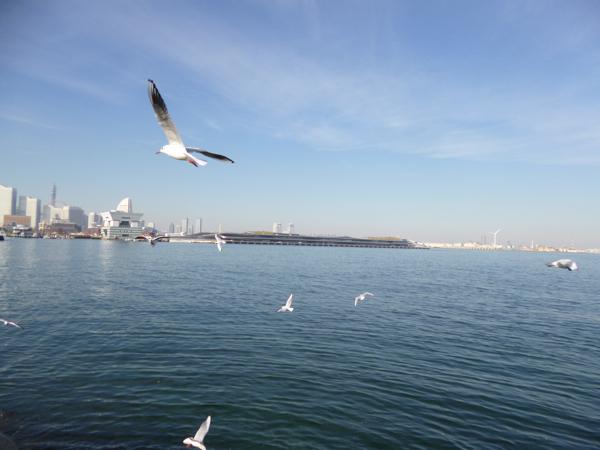 カモメと横浜港大桟橋国際客船ターミナル_c0004024_11565736.jpg