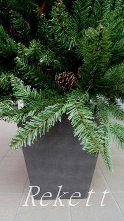 シックなポット入りクリスマスツリー_f0029571_11325623.jpg