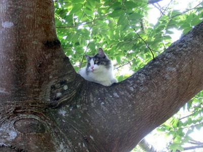 12月8日  今日も樹上に避難_e0104695_0102154.jpg