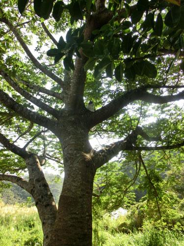 12月8日  今日も樹上に避難_e0104695_095499.jpg