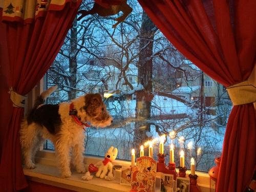 雪と愛媛からの贈り物_a0229904_195344.jpg