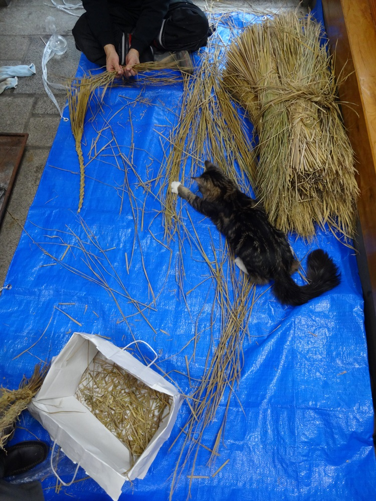 猫の手も借りて_c0111229_1759358.jpg
