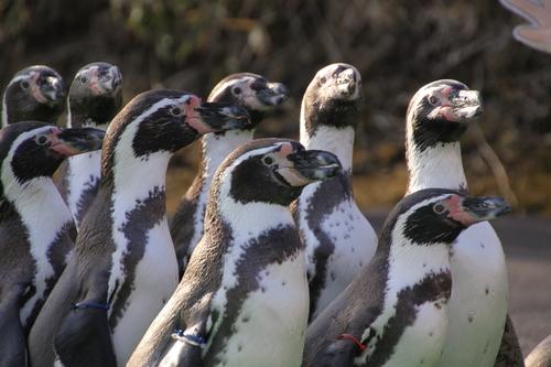 ペンギンのお散歩~釧路動物園 12月10日_f0113639_18171042.jpg