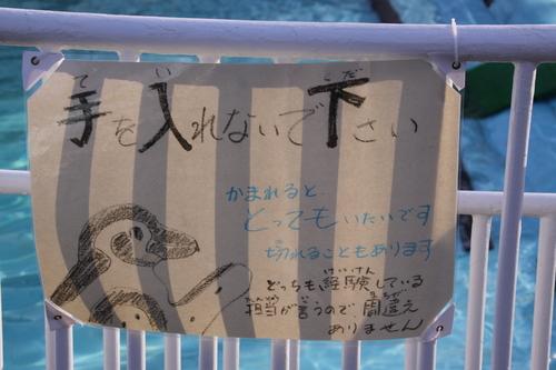ペンギンのお散歩~釧路動物園 12月10日_f0113639_1833317.jpg