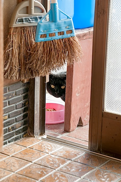 野良猫の去勢、避妊 (今でしょ)_d0073743_216843.jpg