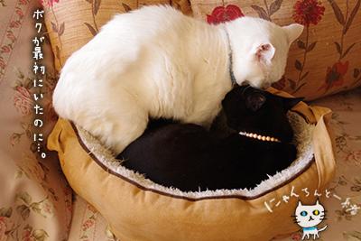 猫鍋ベッド出しました。_e0031853_2115399.jpg