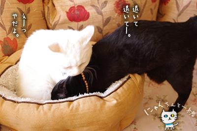 猫鍋ベッド出しました。_e0031853_2115515.jpg