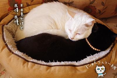 猫鍋ベッド出しました。_e0031853_21163046.jpg