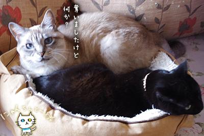 猫鍋ベッド出しました。_e0031853_21164967.jpg