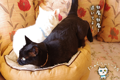 猫鍋ベッド出しました。_e0031853_2116550.jpg