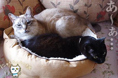 猫鍋ベッド出しました。_e0031853_2117288.jpg