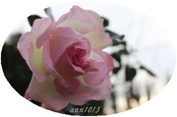 e0232963_18405063.jpg