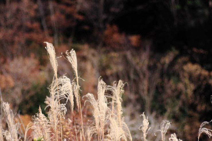 里山を散策_d0225575_2214103.jpg