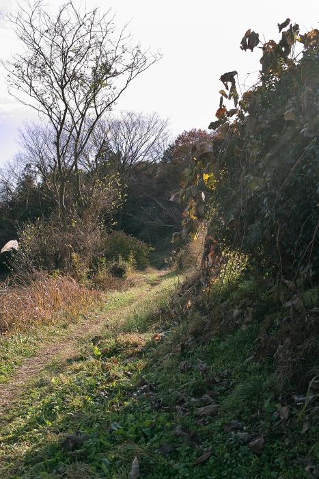 里山を散策_d0225575_2223776.jpg