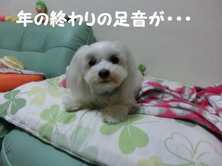 b0193480_1540085.jpg