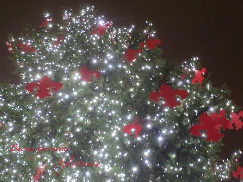 キラキラDUOMO のクリスマスツリー★あんな角度、こんな角度から_c0179785_47562.jpg