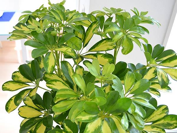 観葉植物!は、もう、室内へ~!子育て!と、一緒!ハハハーー。_d0060693_1851267.jpg