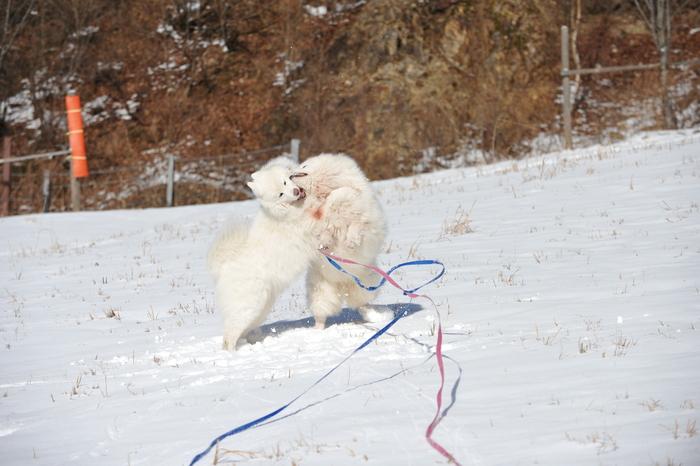 初冬の奥飛騨へ_a0049296_18293239.jpg